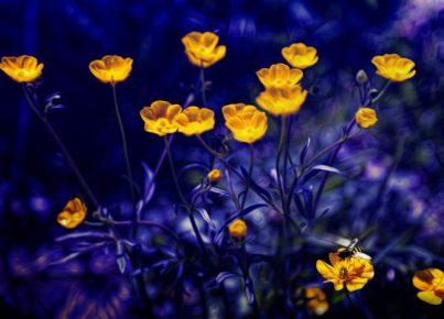cennetten çiçeğime yazarperest